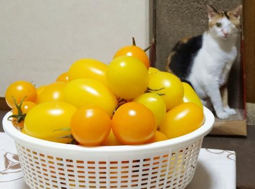 あられ&ミニトマト