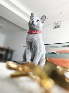 2016-12-6-お菓子ドメ0001b