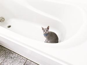 2016-12-10-お風呂場002b