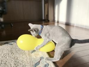 2016-12-11-黄色い風船0002b