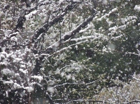 winter4235.jpg