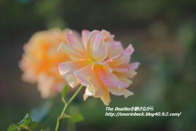 IMG6D_2015_10_18_9999_235.jpg