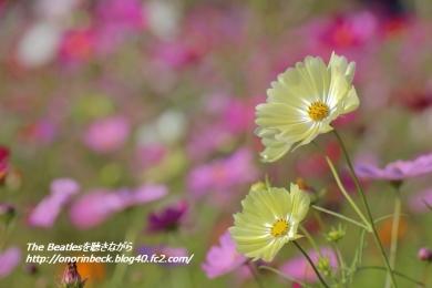 IMG6D_2015_10_18_9999_76.jpg