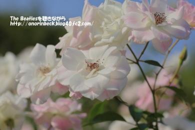 IMG6D_2015_10_24_9999_210.jpg