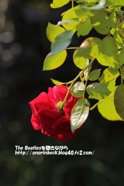 IMG6D_2015_10_24_9999_227.jpg