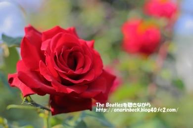 IMG6D_2015_10_24_9999_30.jpg