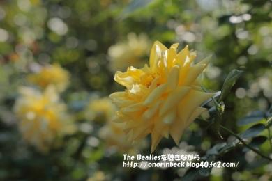 IMG6D_2015_10_24_9999_93.jpg