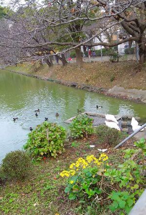 秋の谷戸池-1