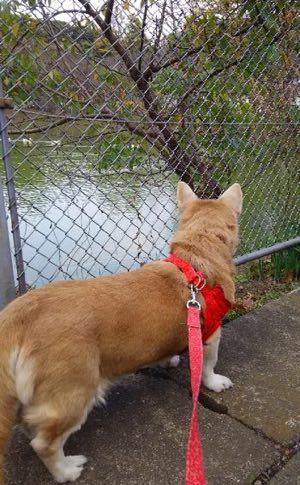 秋の谷戸池-2-2