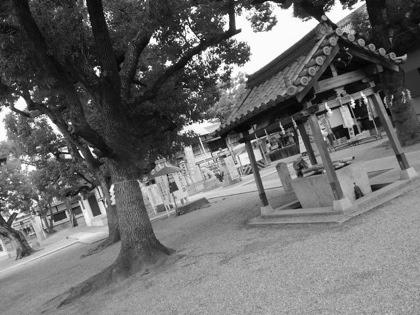 shikinagayoshijinjyaDCIM0174_2015120104044401f.jpg