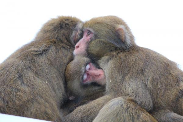 MonkeyCenter_007_org.jpg