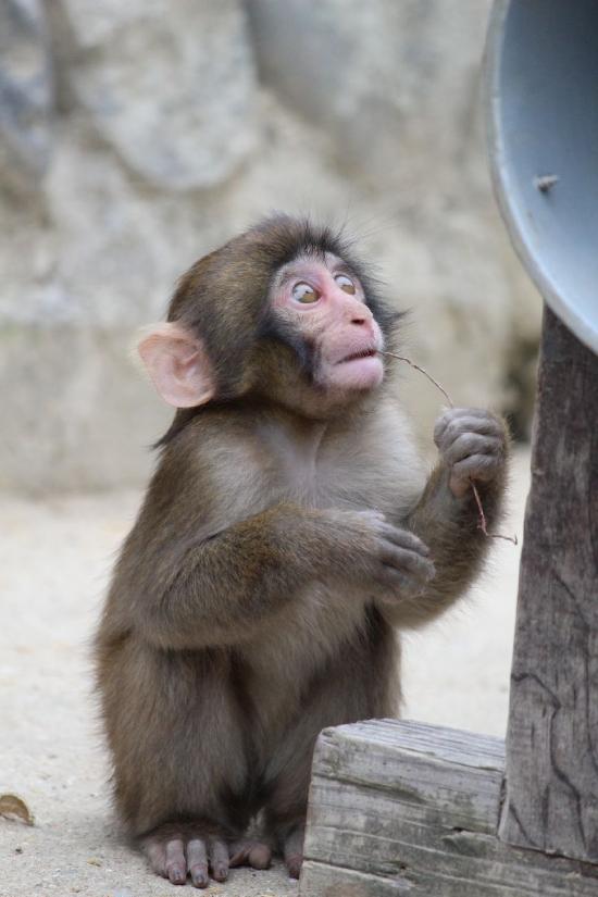 MonkeyCenter_012_org.jpg