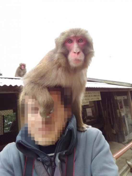 MonkeyCenter_016_org.jpg