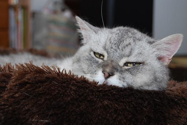 アタシも 眠とーなってきたばい