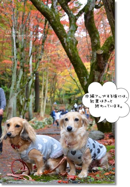 DSC_7511.jpg