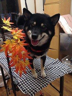 2015-10-23日尾野こなつ