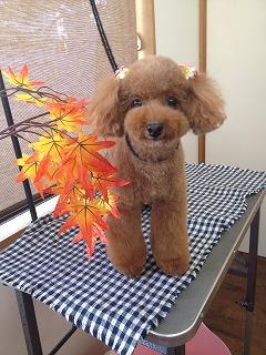 2015-10-24 碇谷もこ