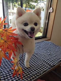 2015-10-27 桑原シロ