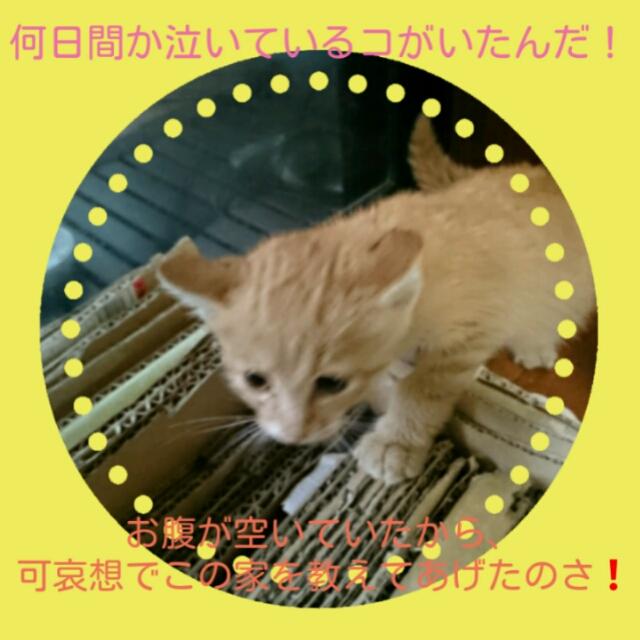 201511110018483cc.jpg