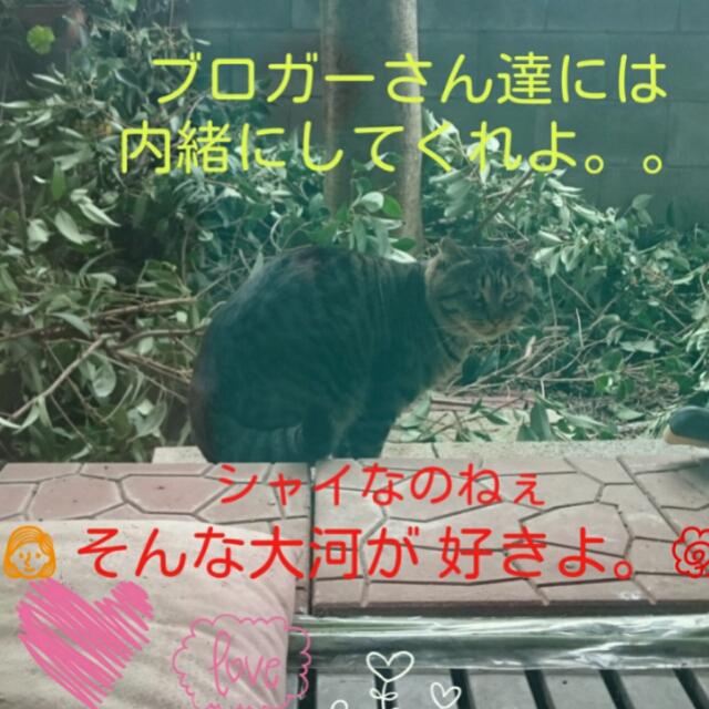 20151128013113bed.jpg