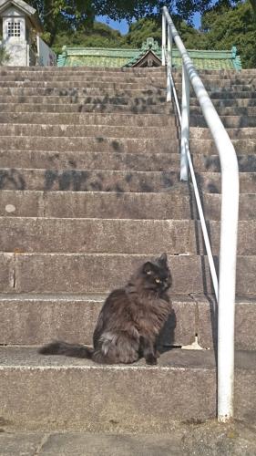 DSC_0072護国寺の黒猫b