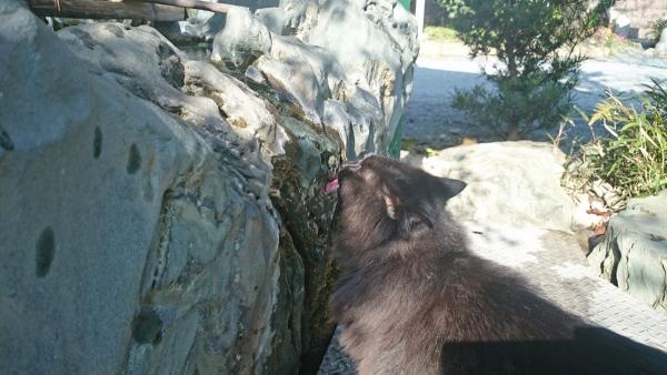 DSC_0044護国寺の黒猫a