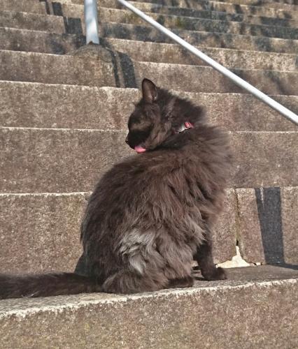 DSC_0062護国寺の黒猫c