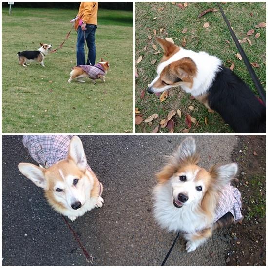 201511 公園散歩