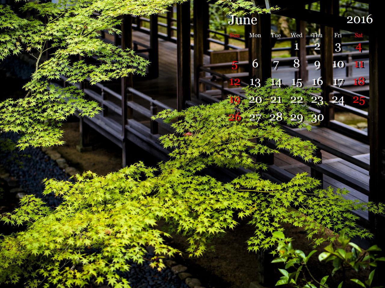 2-1-LR5__M521820-3.jpg