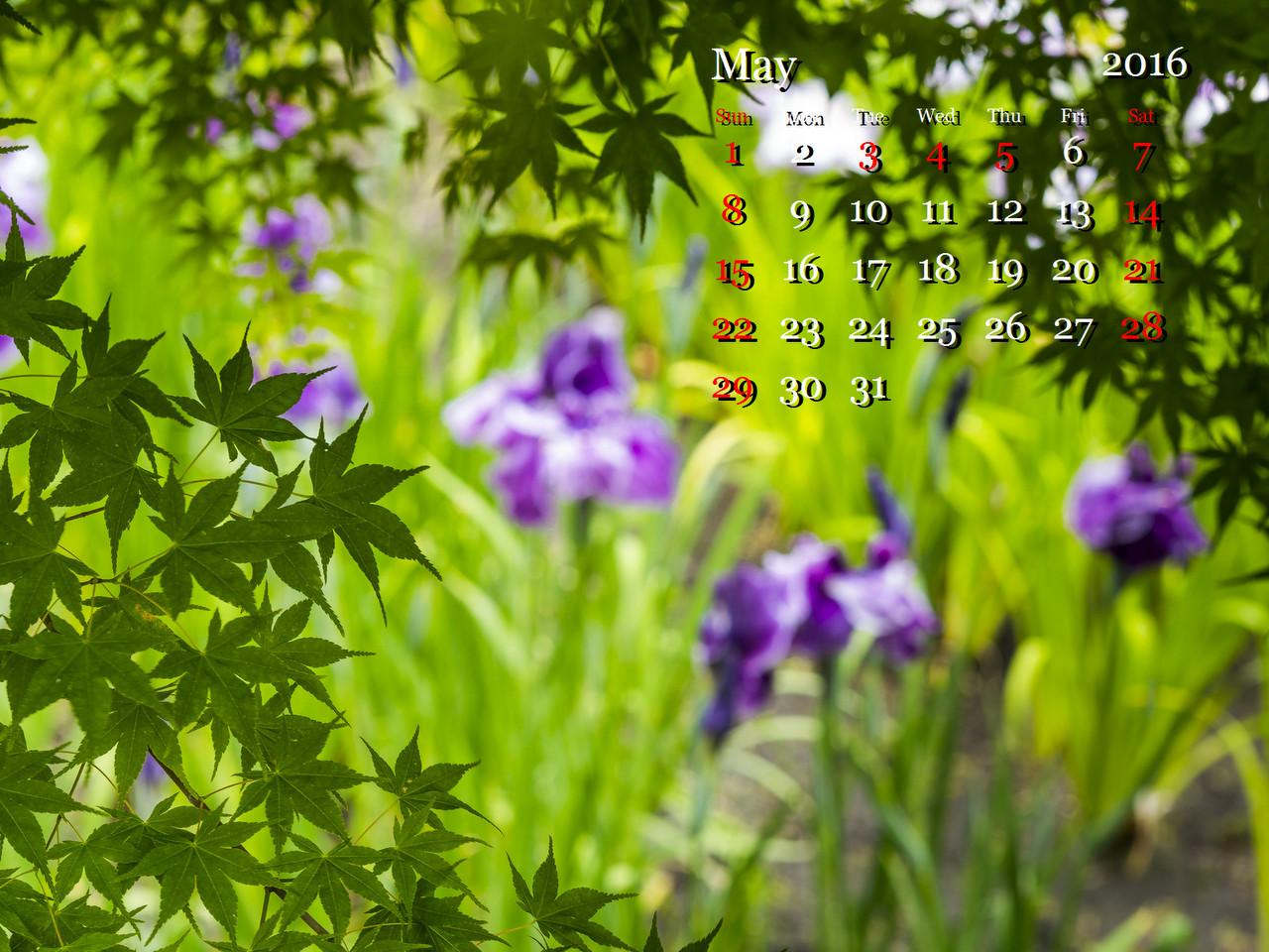 3-1-LR5__M520479-9.jpg