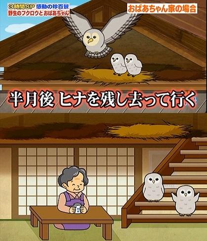 fukurou_01.jpg