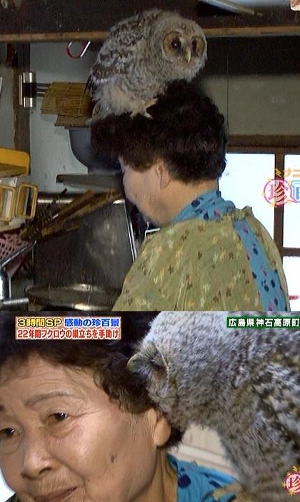 fukurou_02.jpg