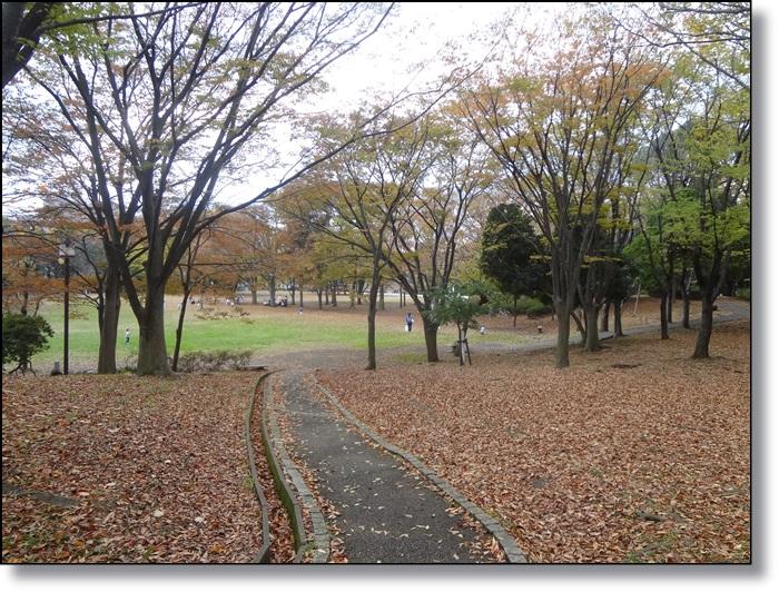 茅ヶ崎中央公園DSC07090