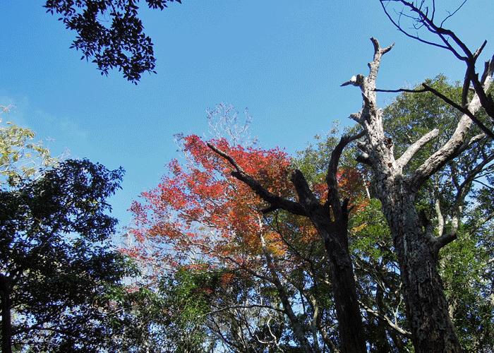 2015,11,3峰入り古道-18