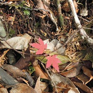 2015,11,3峰入り古道-13