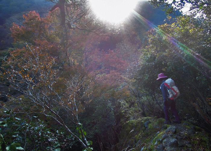2015,11,3峰入り古道-11