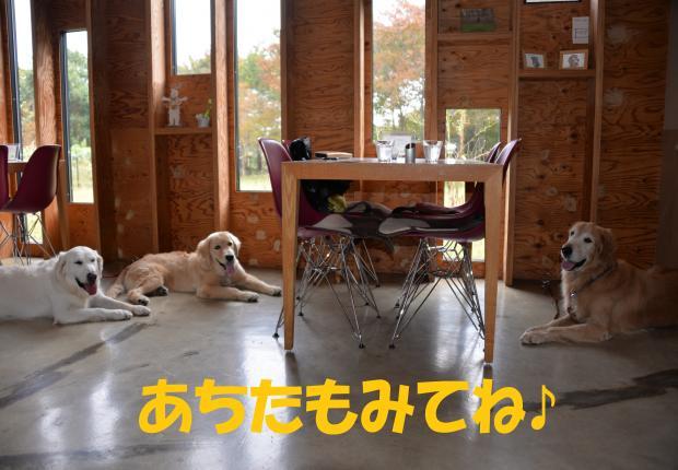 DSC_1921_convert_20151201130307.jpg