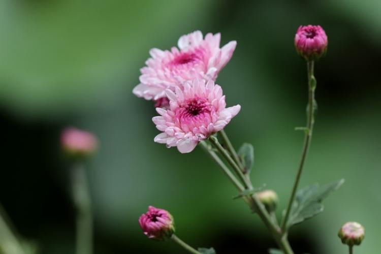 公園の花3151102