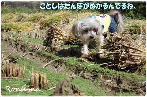 稲刈り2015 34