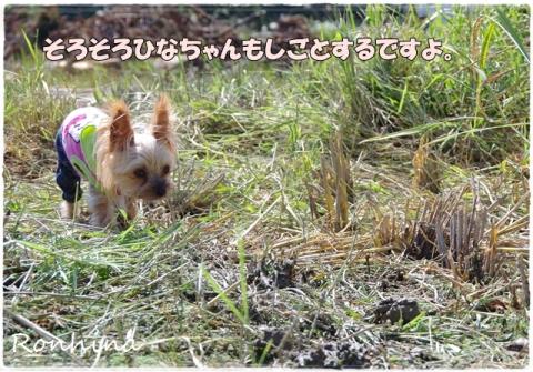 稲刈り2015 32