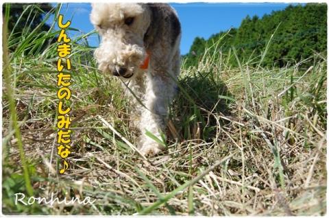 稲刈り2015 39