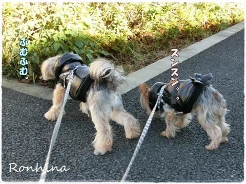 お昼の散歩①