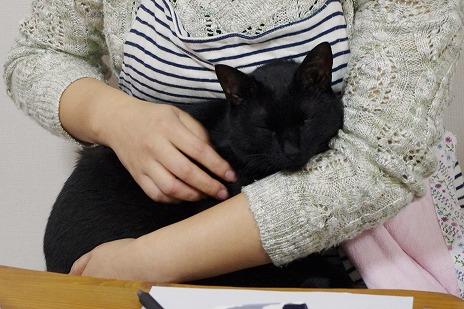膝乗り猫・ミア