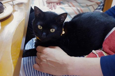 黒猫ミア・お膝の上