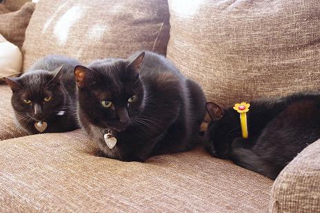 エアコンの下で黒猫3匹