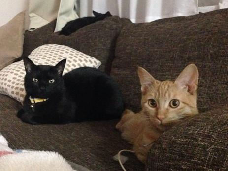 パンを焼くのを見守ってくれる猫たち