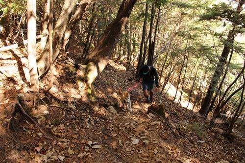 カモシカ登山道17