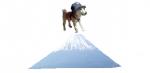 富士山と柴犬さくら
