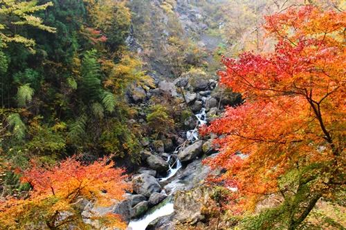 大柳川渓谷24