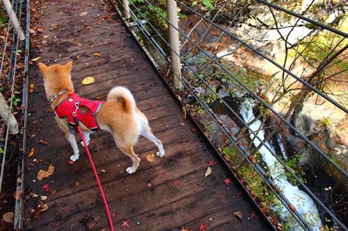 吊り橋コースへ11